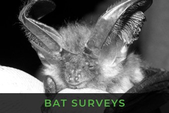 Focus Ecology - Bat Surveys - Bat
