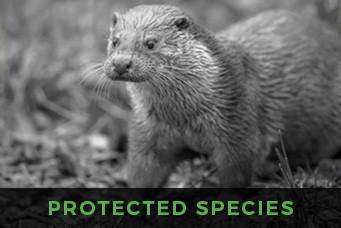 Focus Ecology - ecology surveys - Otter