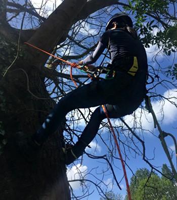 Tree Surveys - Surveyor Tree climbing