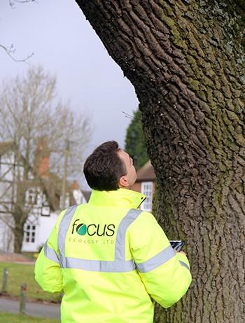 Tree Surveys - Surveyor Tree Inspection